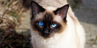 https://www.google.com.co/search?q=gatos&source=lnms&tbm=isch&sa=X&ved=0ahUKEwii59arq8vXAhVTgiYKHd-ECUwQ_AUICigB&biw=1007&bih=584#imgrc=bsfSUCoFEdmGSM: