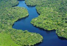 Saving-the-Amazon