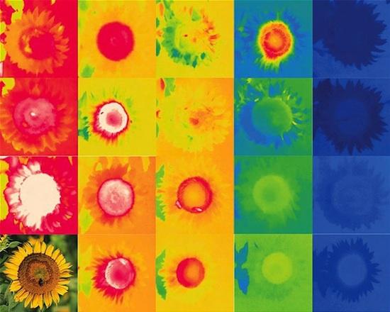 Mapa de calor girasoles