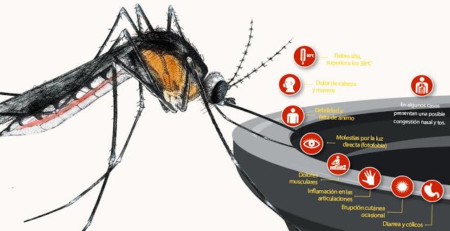 mayaro-virus