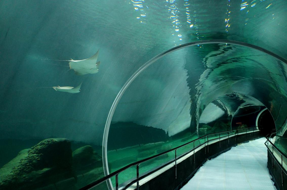 aquario-rio1