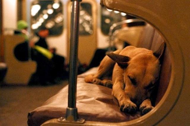 perro-trafico