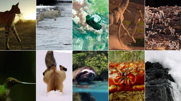 Algunas de las impresionantes imágenes capturadas por los documentalistas de Planet Earth II de la BBC