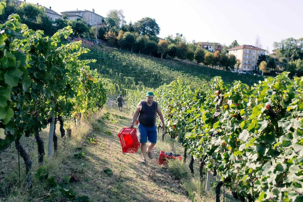 cambio climatico italia vino6