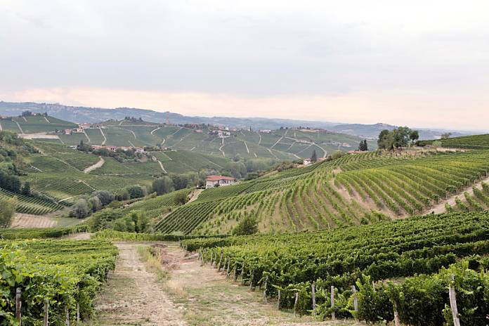 cambio climatico italia vino3