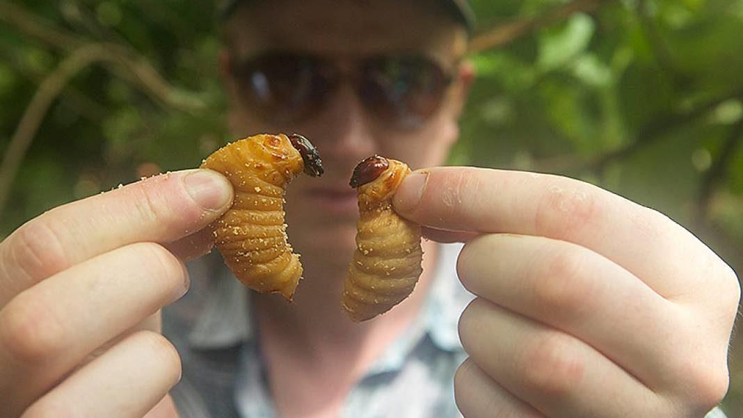 insectos-comida-02+1