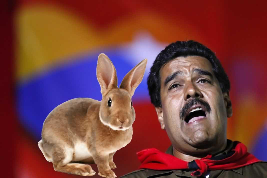 maduro conejo