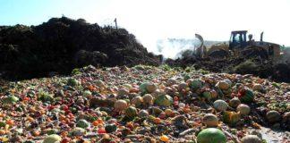 alimentos botados basura+1