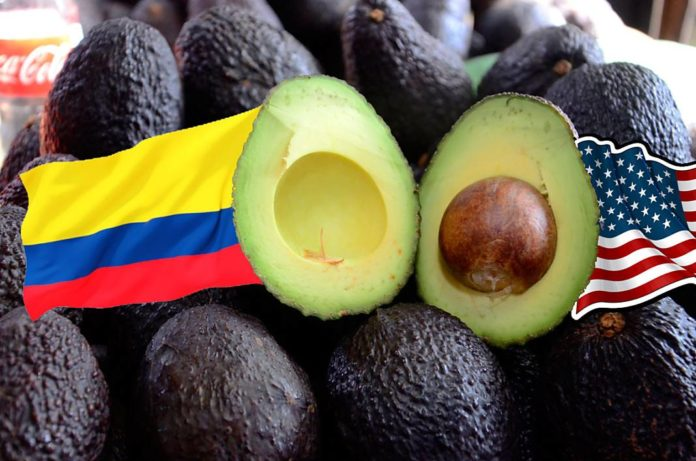 Aguacate-2+1