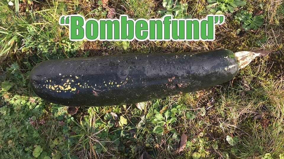pepino bomba+1