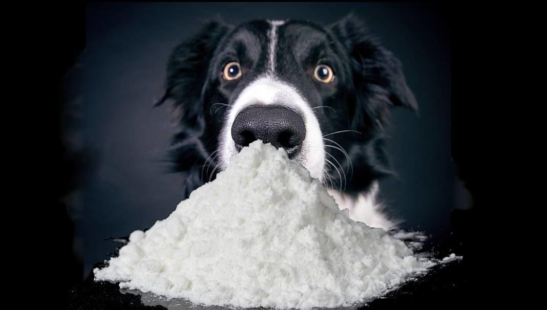 perro cocaina+1