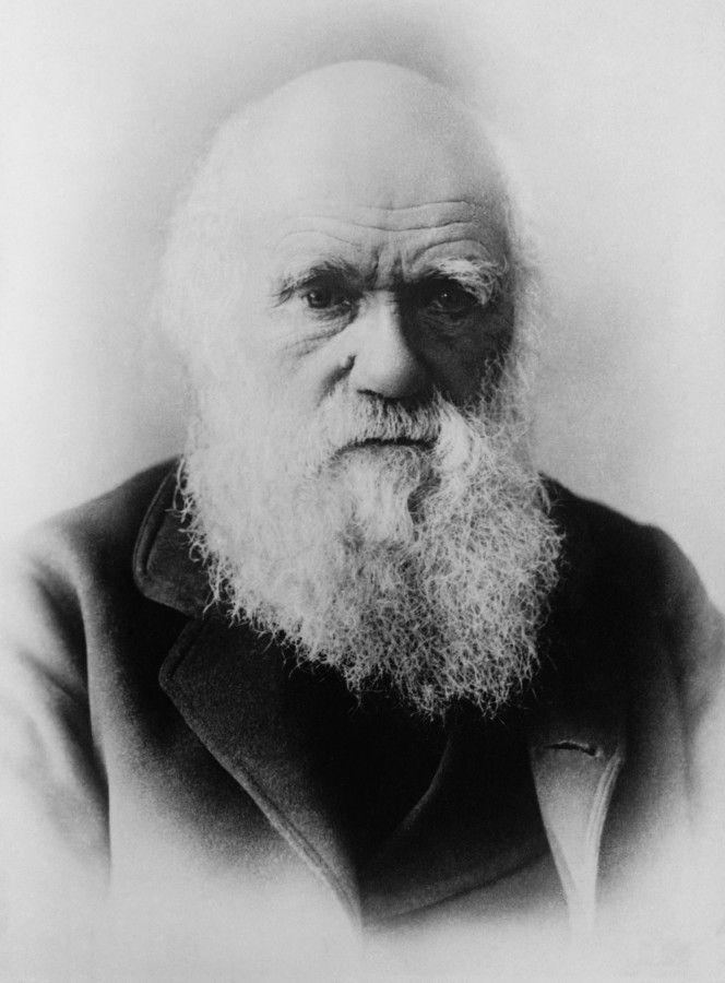 Charles Darwin Foto por WikiImages+1