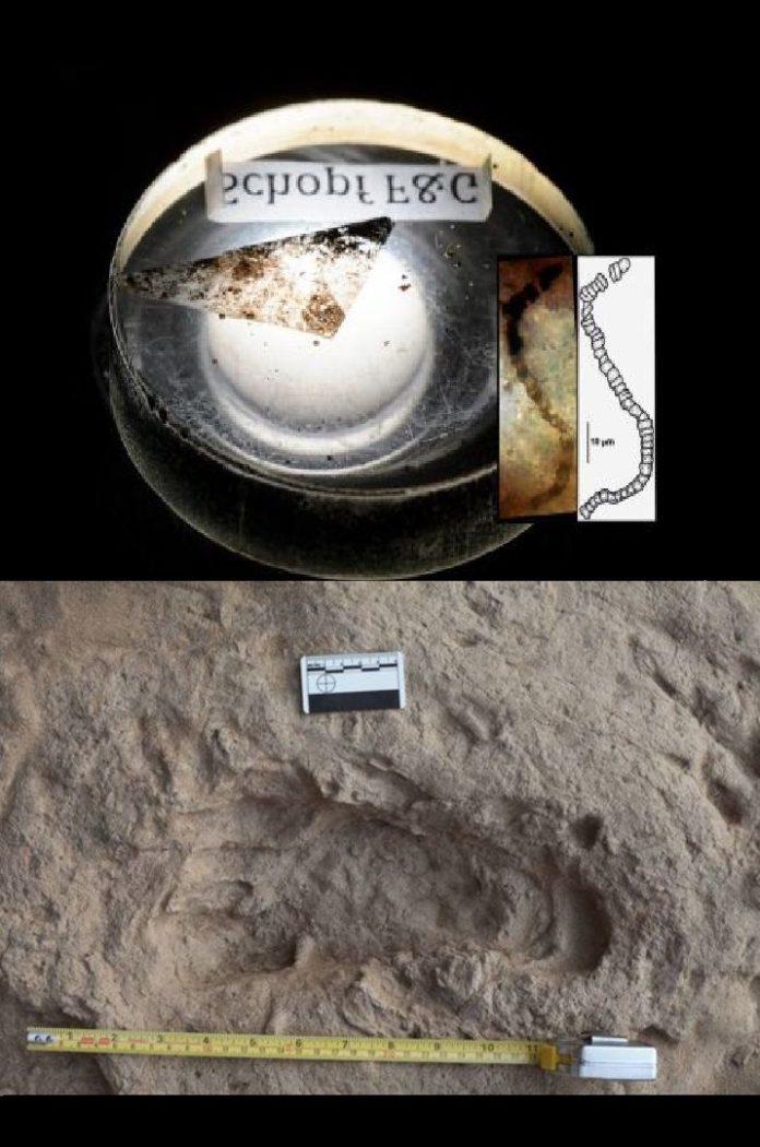 Fósiles de 3.500 millones