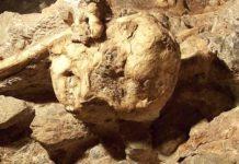 """Lilttle foot"" fósil más completo de Austrolopithecus, que data de 3,67 millones de años"