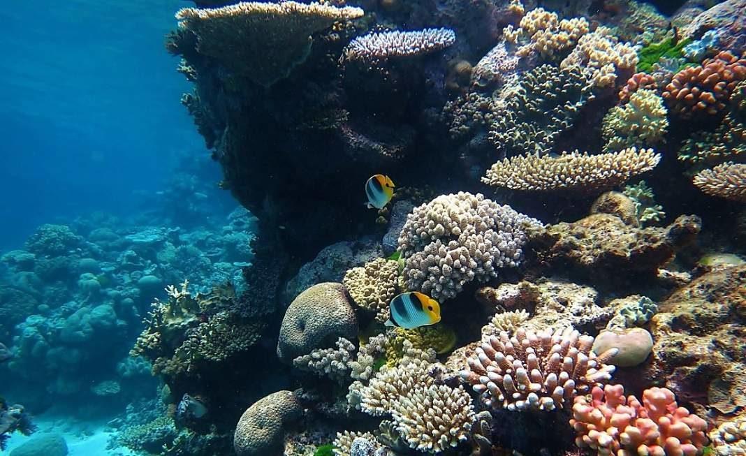 barrera coral australia+1