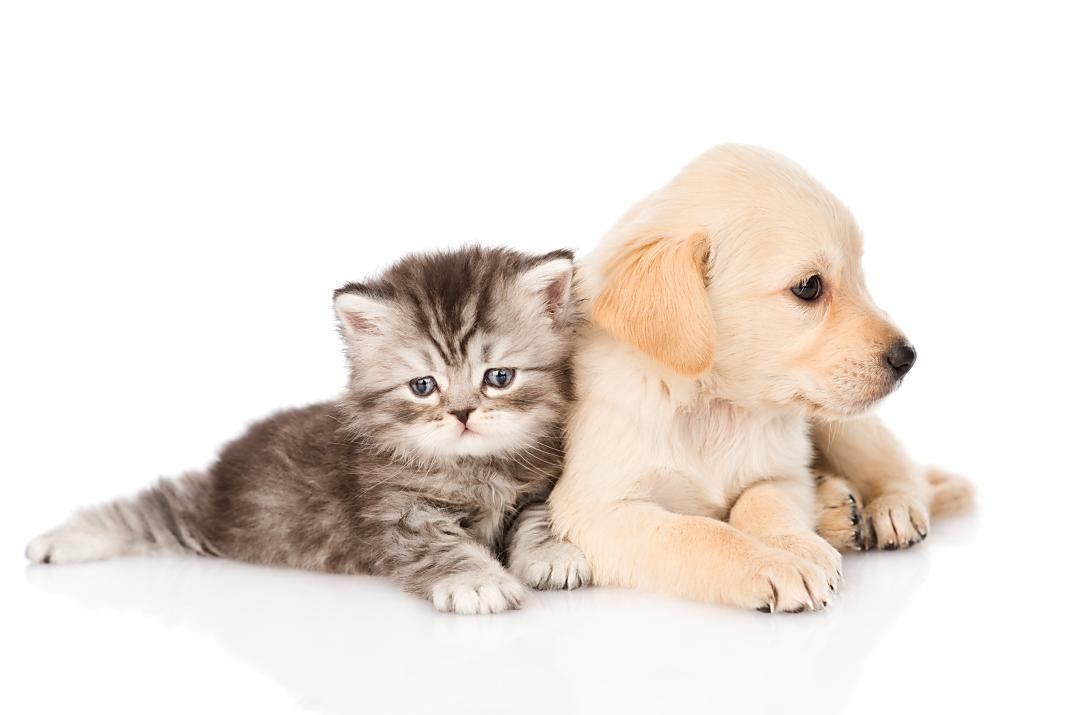 cachorro_perro_gato-1+1