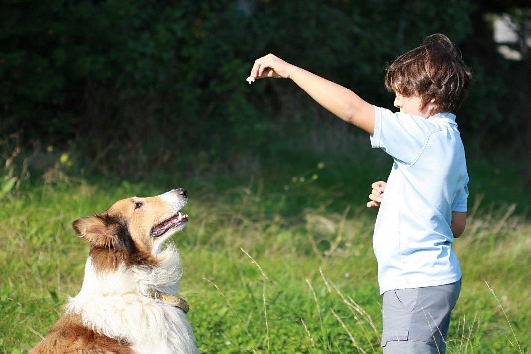 golosinas-para-perros+1