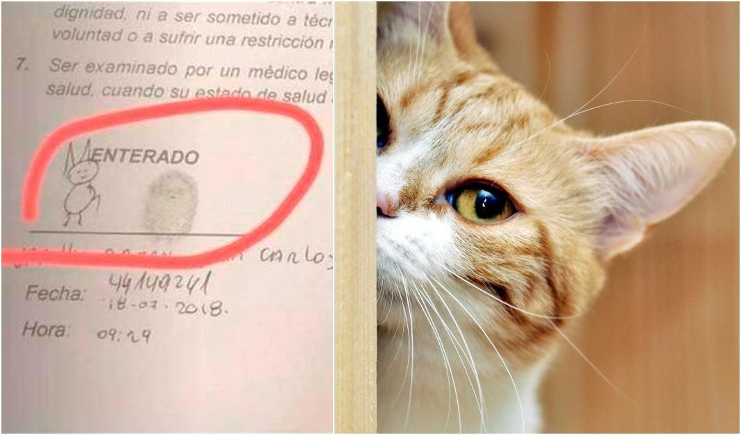 firma gato