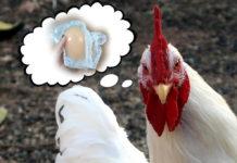 pollo silicona