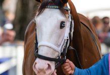 caballo1+1