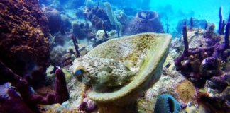 corales caribe+1