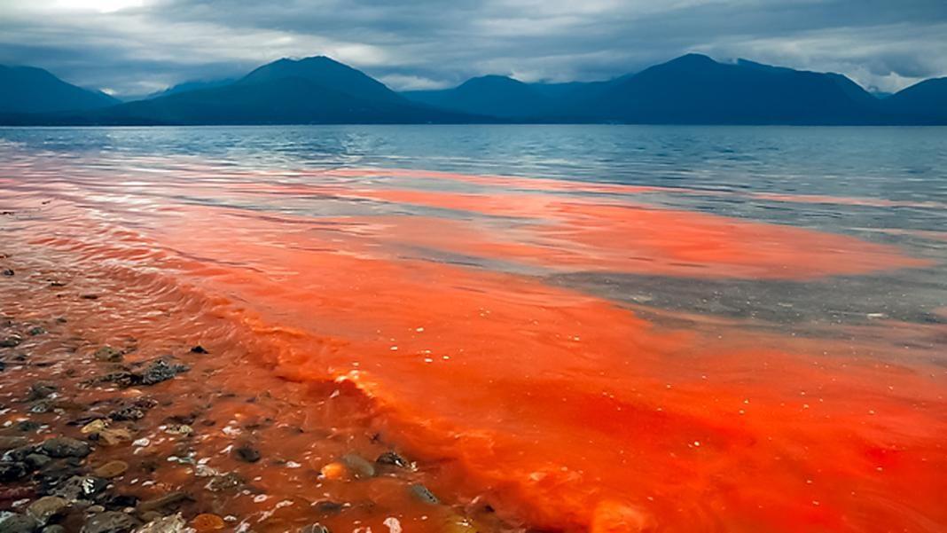 marea roja+1