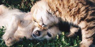 perro y gato+1
