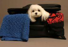 Viajar-con-perros