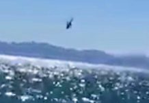elicoptero mexico