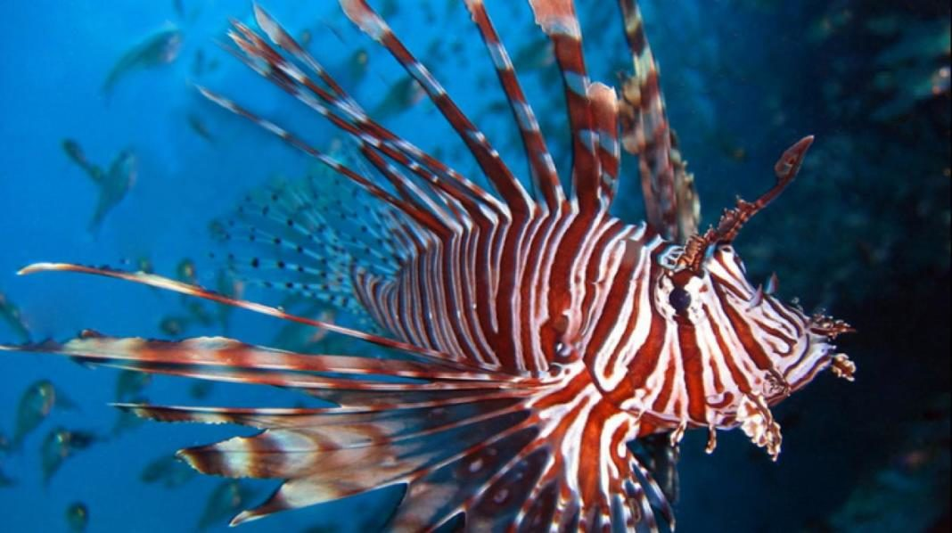 pez leon