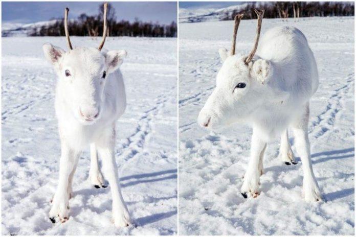 reno blanco+1