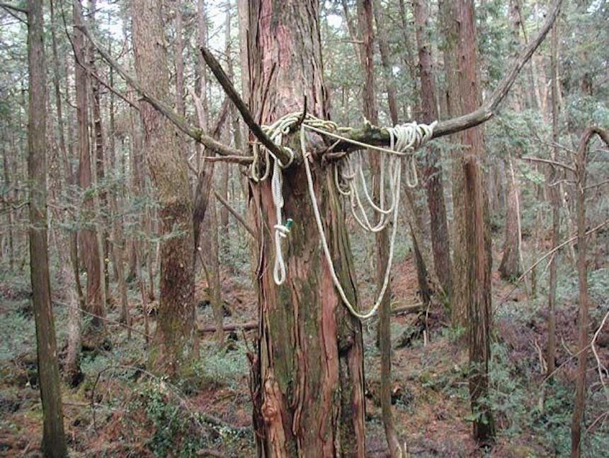 El bosque de Aokigahara