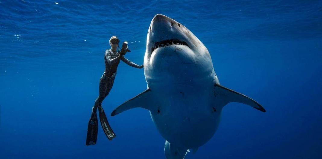 tiburon+1