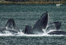 ballenas+1
