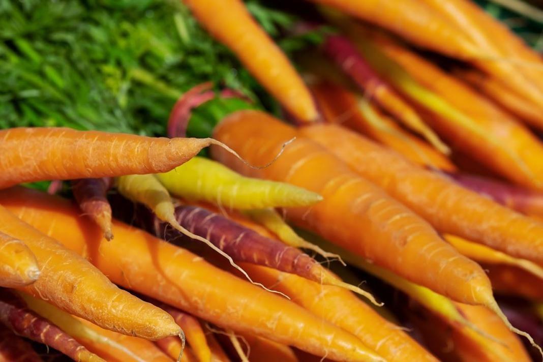 zanahoria+1