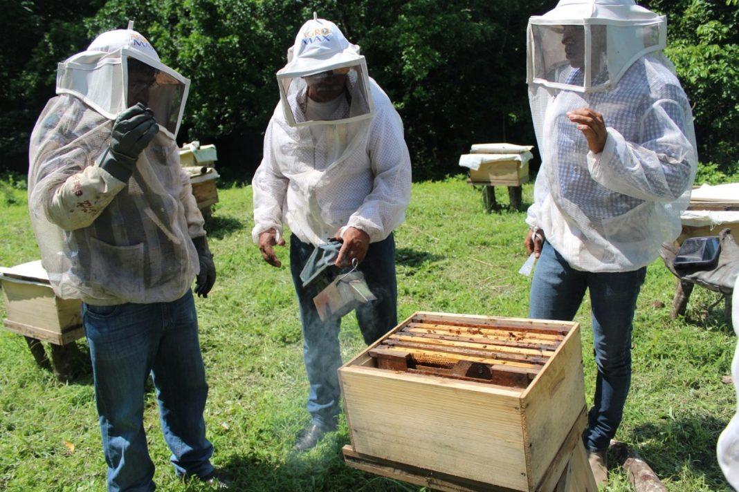 cria-abejas