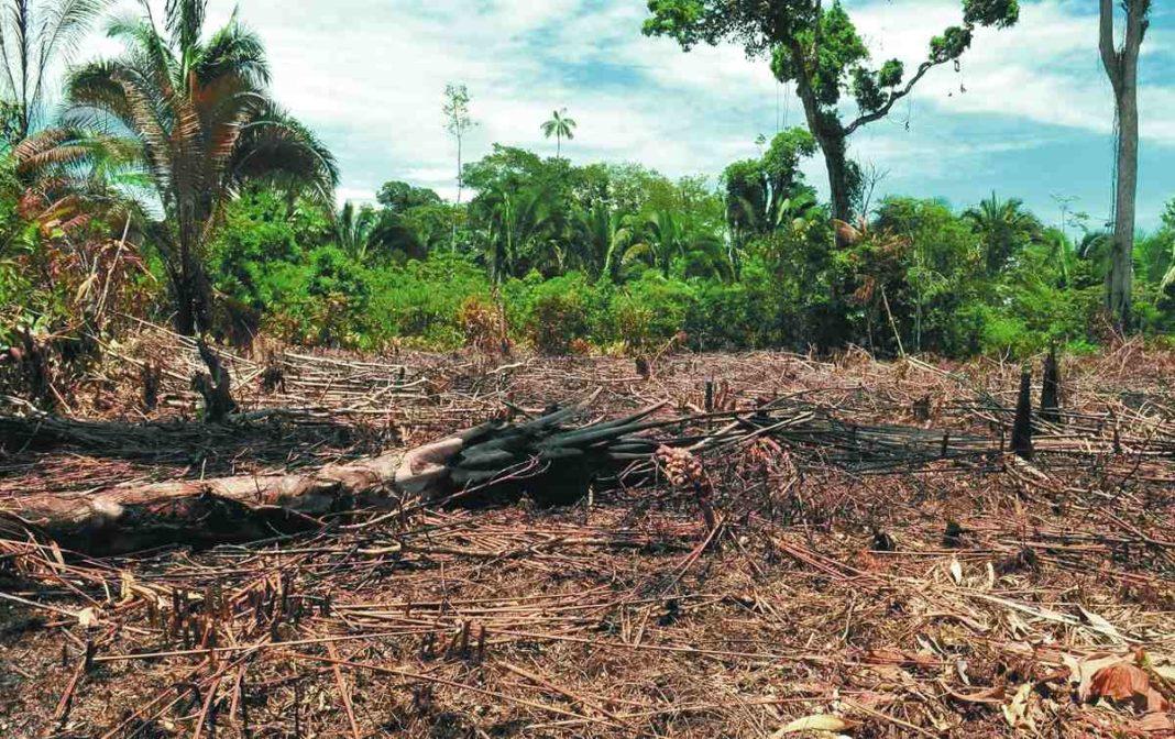 deforestacion+1