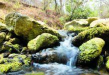Reserva natural Los Charcones+1