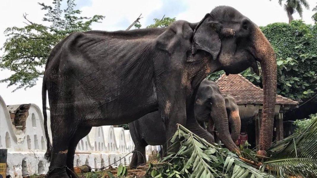 Tikiiri elefanta